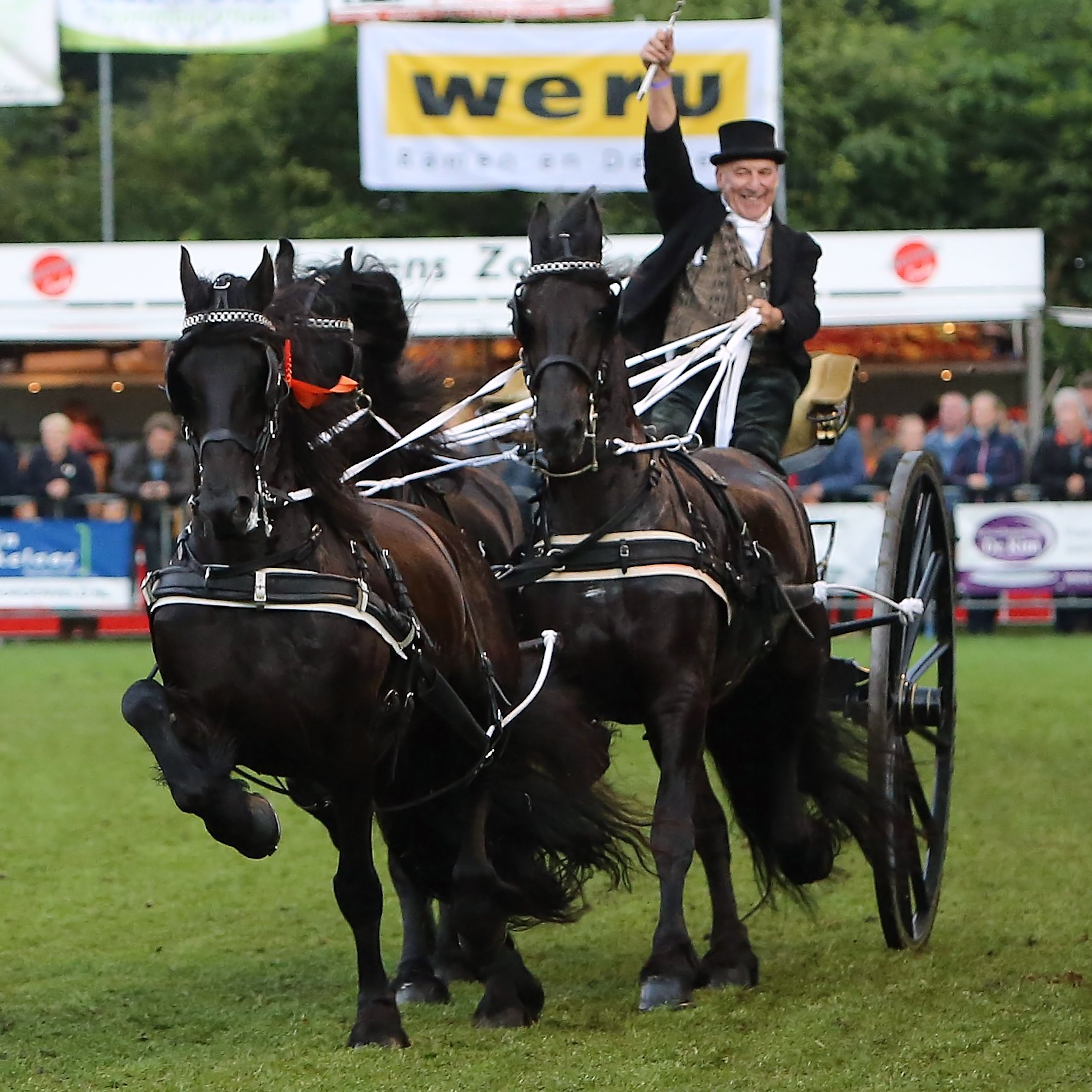 Nationaal Tuigpaardenconcours in Norg, Drenthe