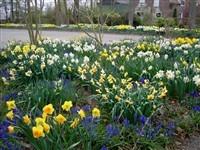 Tulpenroute en Tuinenroute in de Noordoostpolder in Espel, Flevoland