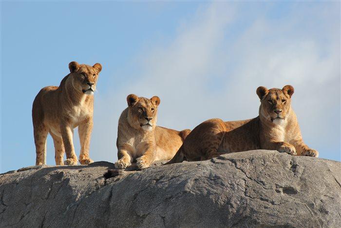 Wildlands Adventure Zoo Emmen in Emmen, Drenthe
