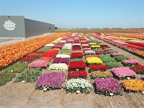 Tulip Experience Amsterdam in Noordwijkerhout, Zuid-Holland