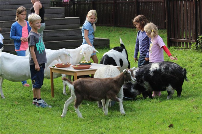 Kinderboerderij de Goudse Hofsteden in Gouda, Zuid-Holland