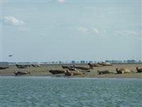 Zeehonden safari vanuit Zierikzee in Zierikzee, Zeeland