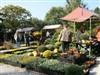 Oogstdag en Fruitshow De Kruidhof in Buitenpost, Friesland