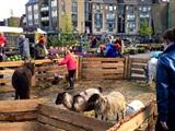 Tuinbraderie en Voorjaarsmarkt Houten