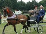 Paardendagen de Westhoek