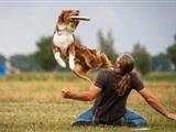 Nederlands Kampioenschap Dogfrisbee