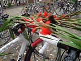 Toertocht de rit naar de Gladiolen