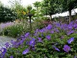 Groei & Bloei - De diervriendelijke tuin