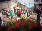 Bloemen- en Tuinmarkt Veendam