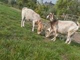 Paaseieren zoeken op boerderij de Hunze Heerd
