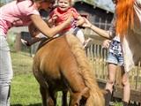 Ponyknuffelen en verzorgen voor de kleintjes