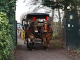 Jolly WinterWonderLand Christmas Rides