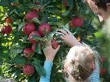 Fruit-uitje in de Herfstvakantie