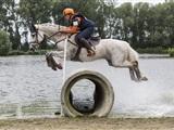 Paardenfestijn