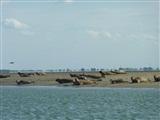 Zeehonden Safari vanuit St-Annaland