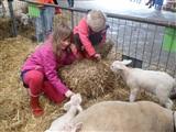 Lammetjesdagen op de Boerderij