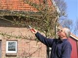 Lentekriebels bij Boomkwekerij Jos Frijns & Zonen