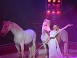Circus Freiwald komt naar Uden