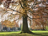 Wandeling langs bijzondere bomen in 's-Graveland