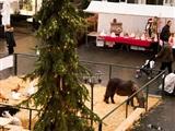 Peelse Kerstmarkt