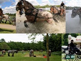 Power Horse Competitie