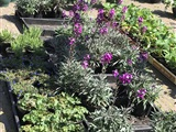 Tuinbraderie - Voorjaarsmarkt Houten