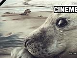 CineMekka - Wad