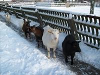 Kinderboerderij de Veldhoeve