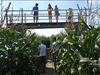 Bloemenboerderij - Maisdoolhof in Saaxumhuizen, Groningen