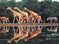Burgers' Zoo in Arnhem, Gelderland