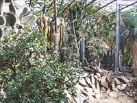 Cactus en Reptielenhuis de Drakenwereld