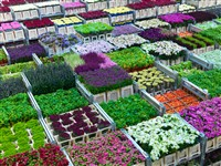 Royal FloraHolland Aalsmeer