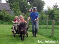 Kinderboerderij Feltsigt in Bekveld, Gelderland