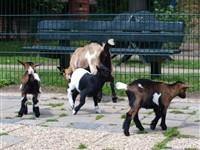 Kinderboerderij Geldrop