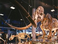 Naturalis in Leiden, Zuid-Holland
