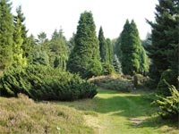 Pinetum Ter Borgh in Anloo, Drenthe