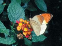 Vlinderparadijs Papiliorama in Havelte, Drenthe