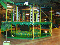 Zippa Zebra's Funjungle